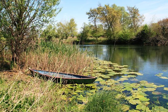 Lápos, mocsaras kis tó
