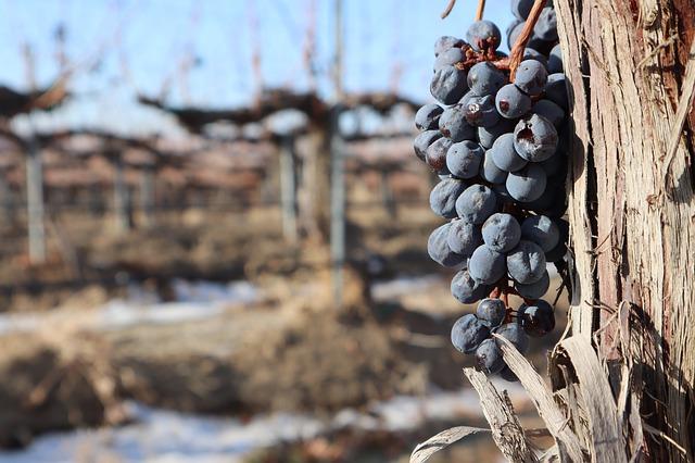 Vonyarcvashegy tradicionális szőlős gazdák otthona